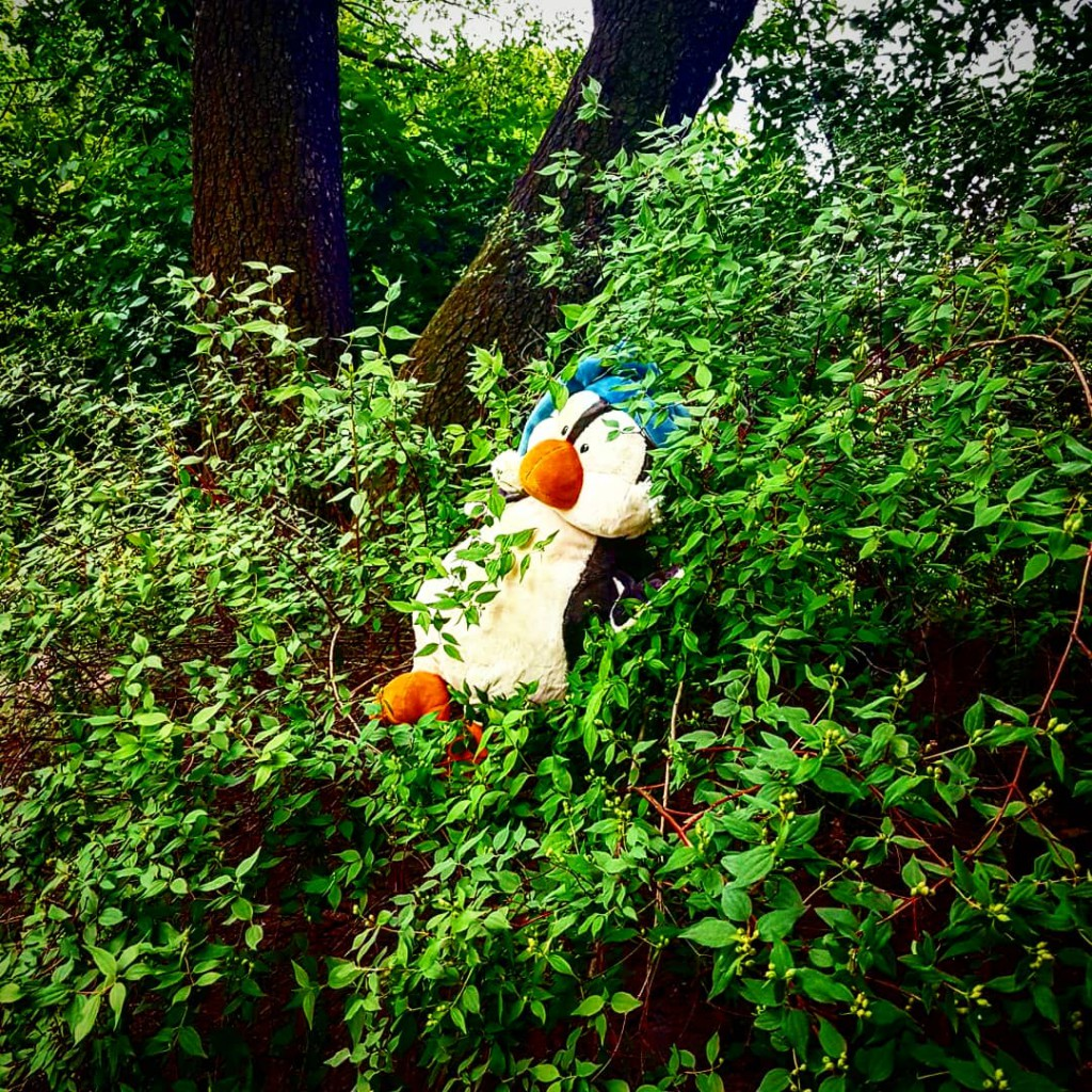 Petunia versteckt sich im Gebüsch